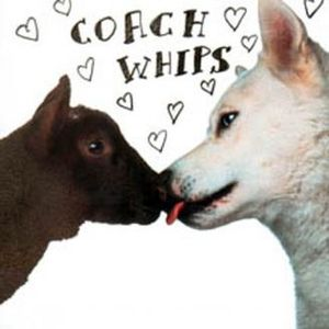COACHWHIPS... - BANGERS VS FUCKERS...